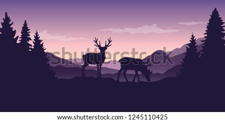 two wildlife reindeers on