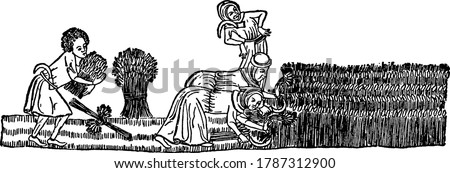 Two women bent over using sickles to cut the grain and another man stands behind them, gathering the reaped grain. He has a sickle tucked in his belt, vintage line drawing or engraving illustration  Foto stock ©