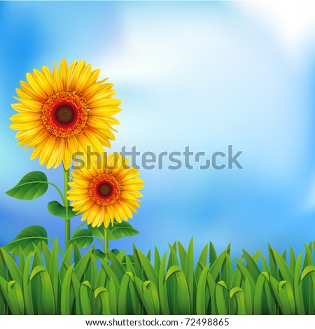 two yellow sunflowers on the