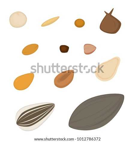 Types of seeds - A variety of plant seed shapes, including sunflower, spinach, millet, pumpkin, and squash (among others).   Vector illustration. Transparent background in vector file.