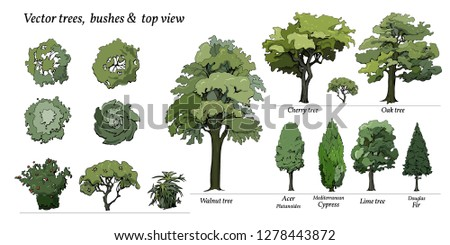Types of Trees, Bushes, Top view for landscape design. Vector illustration, hand drawn. Set of  Oak, Cypress, Fir, Acer isolated on white.