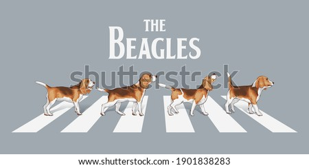 typography slogan with beagle dogs walk on the street  ,vector illustration for t-shirt. Zdjęcia stock ©