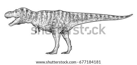 tyrannosaurus illustration