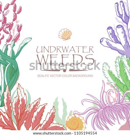 underwater corals  algae and