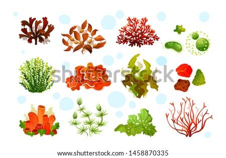 Underwater marine flora. Marine aquarium flora, coral reef underwater seaweeds, ocean plants phytoplankton, algae Sargassum, laminaria, sea moss tropical sea plant elements seaweed silhouette vector