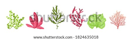Underwater marine flora set. Marine aquarium flora, aqua plants, coral reef underwater seaweed ocean plants phytoplankton, algae, laminaria, sea moss tropical sea plant underwater painting vector