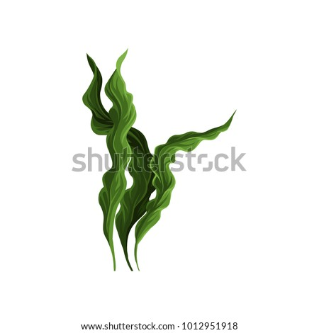 Underwater seaweed spirulina, aquatic marine algae plant vector Illustration