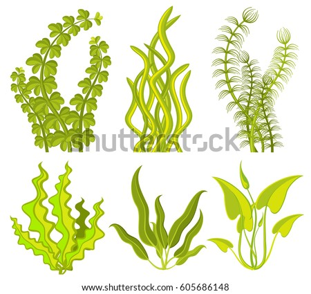 Underwater seaweed vector elements. Sea plant nature isolated on white background illustration