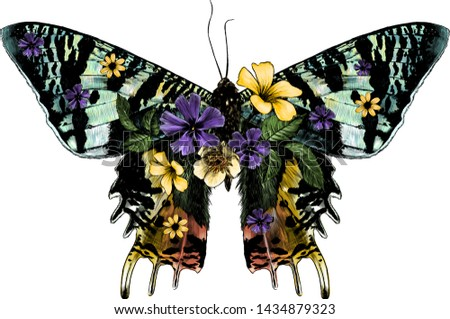 Urania Malagasy butterfly with open wings decorated with flowers and leaves symmetrically, sketch vector graphic style color illustration on white background Zdjęcia stock ©