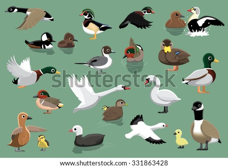 us ducks cartoon vector