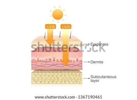 UVB rays from sun penetrate into epidermis of skin layer and UVA deep into the dermis. Illustration about health care and medical diagram. Foto stock ©