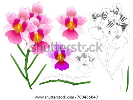 Vanda Miss Joaquim Orchid Outline. Singapore National Flower. isolated on White Background. Vector Illustration.