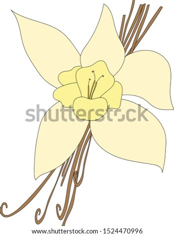 Vanilla beans and orchid flower.