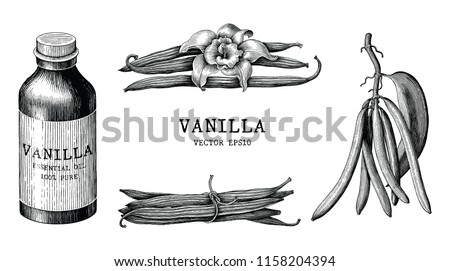 Vanilla collection hand draw vintage clip art isolated on white background
