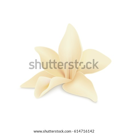 Vanilla flower, isolated on white background. Realistic vector illustration.