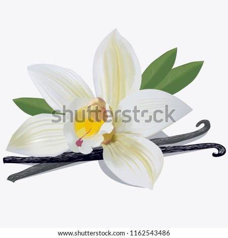 Vanilla flower sticks and leaves isolated on white background as package design element. Vector EPS 10