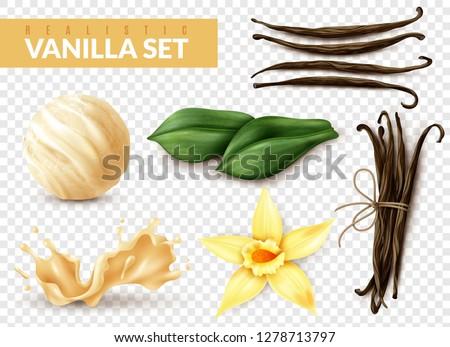 Vanilla realistic set with ice cream scoop shake splash flower dried beans leaves transparent background vector illustration