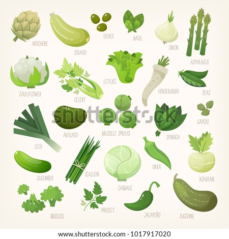Variety of green and white common farm and exotic fruit and vegetables. List of plants from grocery store with their market names. Isolated vector icons.  #1017917020