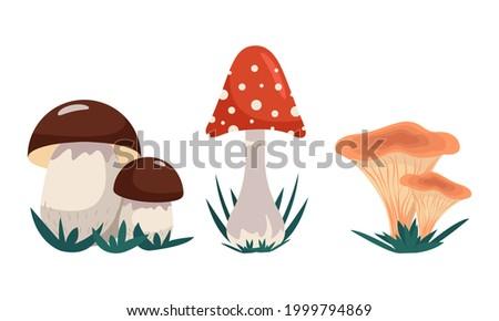 variety of mushrooms  set of