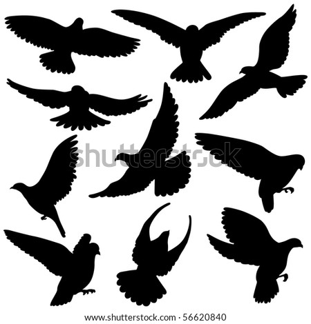 Variety of  Pigeon Silhouettes. This Pigeon illustration is perfect for a variety of different design projects.