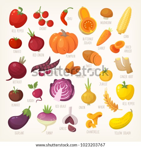 Variety of yellow, red and purple common farm and exotic fruit and vegetables. List of plants from grocery store with their market names. Isolated vector icons.
