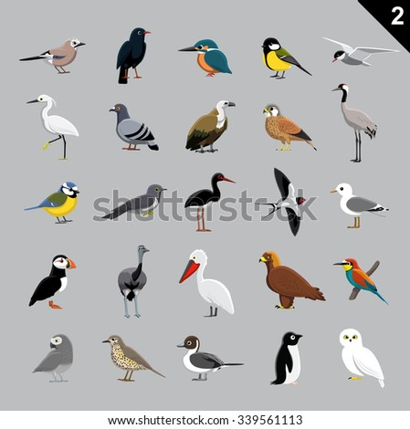 various birds cartoon vector