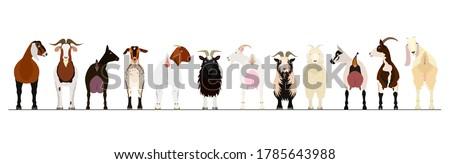 various breeds of goats border Foto stock ©