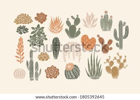 Various cactus collection. Vintage silhouette style illustration. Succulent set. Сток-фото ©