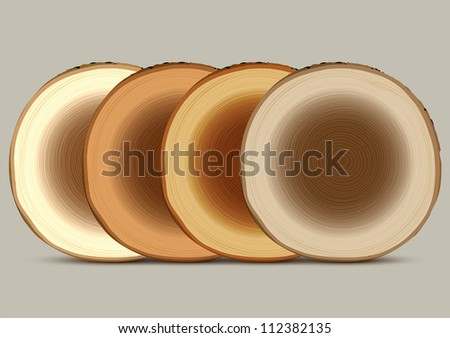 Various cross section of tree stump. Vector set