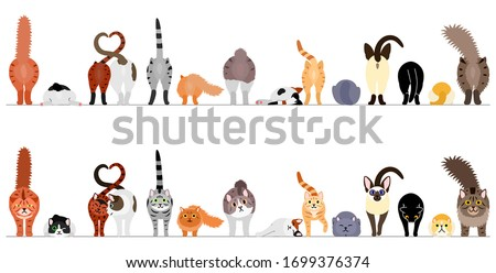 various cute cats border in a