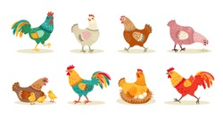 Various cute chickens flat icon set. Cartoon hens and roosters walking, standing, sitting in nest isolated vector illustration collection. Funny domestic birds, farm and poultry concept
