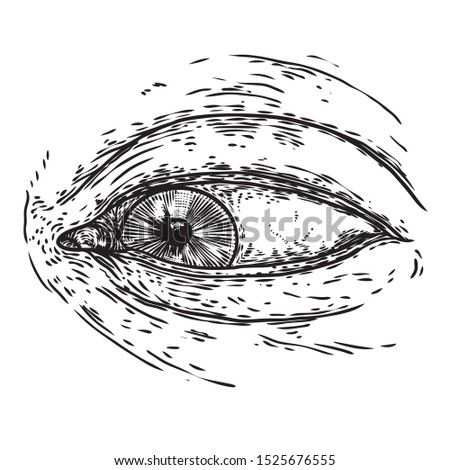 Various drawing of the all seeing eye in different direction and emotion. The symbol of the Masons as an option design element. Human vision. Vector.