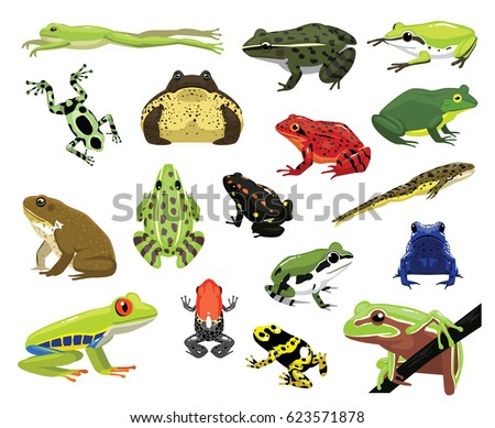 various frogs cartoon vector