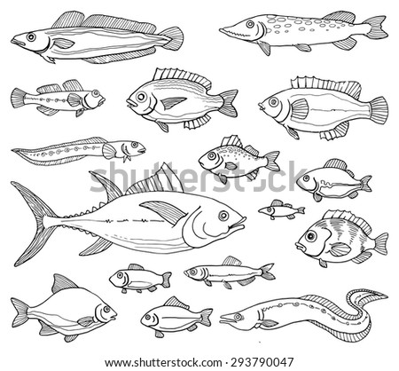 Various hand drawn fish, black and white outline, vector ...