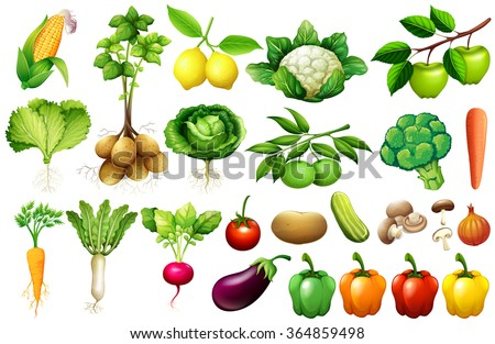 Various kind of vegetables illustration