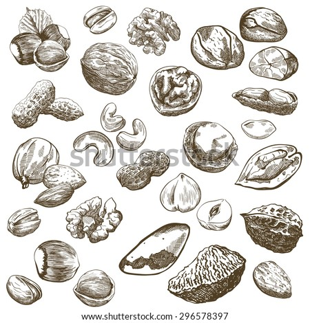 Various kinds of nuts, set of sketches made by hand