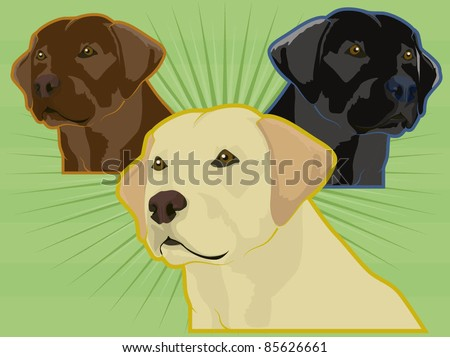 various labrador retriever dogs