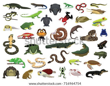 stock-vector-various-reptile-and-amphibian-vector-illustration