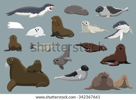Various Seals Set Cartoon Vector Illustration