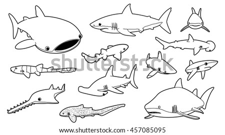 various sharks cartoon vector