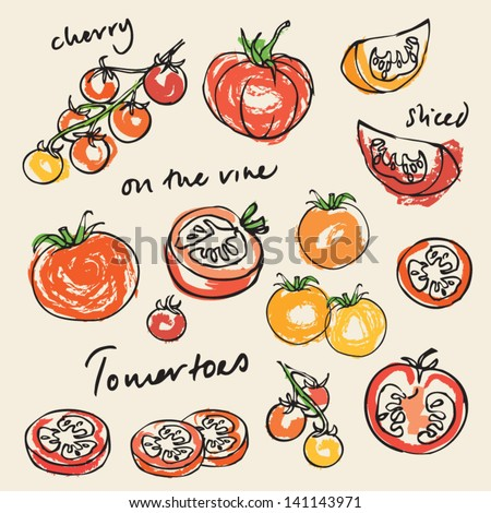 Various tomatoes vector illustration