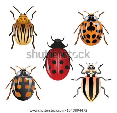 various types of ladybugs