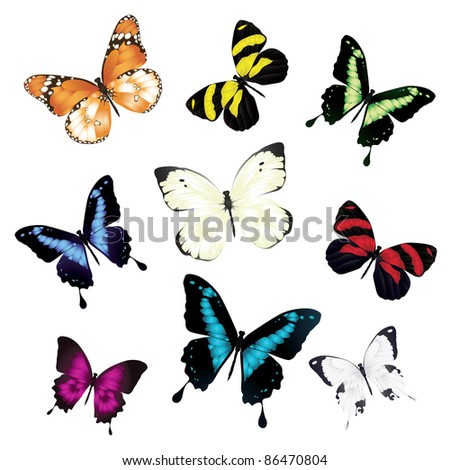 Various vector butterflies on white background