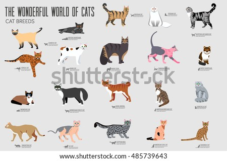 vecto  breed cats icons set
