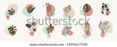 Vector abstract botanical compositions. Boho story highlites template. Fluid organic shapes, neutral colors. Bohemian exotic leaves. Mid Century Modern foliage design. Twigs illustration