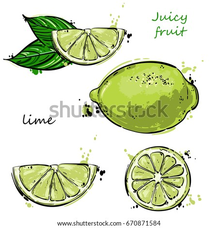 Vector abstract illustration of a lime. An isolated set for your design of postcard, menu, banner, poster, advertisement and other.
