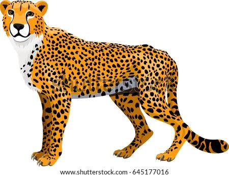 vector african cheetah