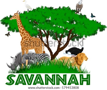 vector african savannah with
