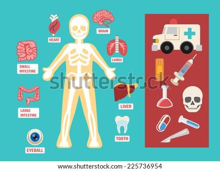 vector anatomy flat color icon