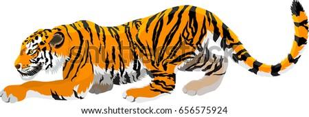 vector angry tiger mascot